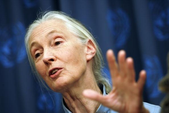 Jane Goodall Net Worth